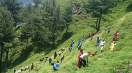 Plantation in Himachal
