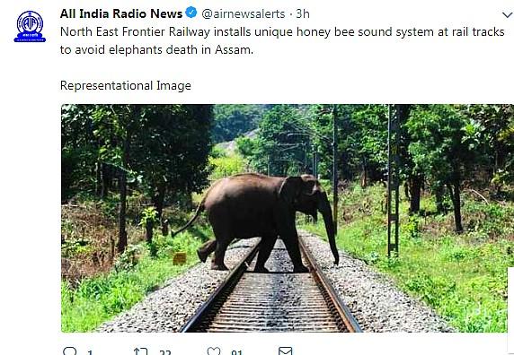 Elephant on Rail track